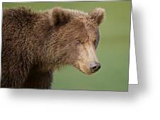 Coastal Brown Bear Greeting Card