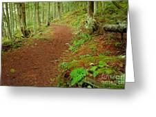 Coastal Trail Greeting Card
