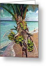 Coconuts On Beach Greeting Card