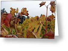 Colchagua Valley Vineyard  Greeting Card