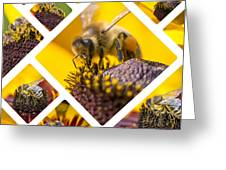 Collage Of Western Honey Bee Greeting Card