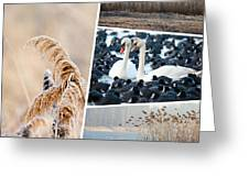 Collage Of Winter Grass Greeting Card