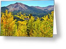Colorado Fall Colors Greeting Card