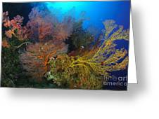 Colorful Assorted Sea Fans And Soft Greeting Card
