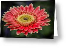 Colorful Daisy Greeting Card