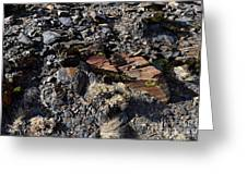 Colorful Lichens Growing On Rocks Along Monument Ridge, In The Eastern Sierra Nevadas Greeting Card