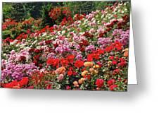 Colorful Spring Rose Garden Greeting Card