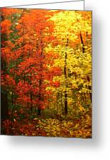 Colors Of Autumn II Greeting Card
