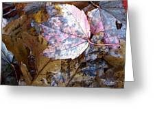 Colors Of The Fall Greeting Card