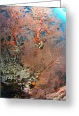Colourful Sea Fan With Crinoid, Papua Greeting Card