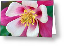 Columbine Flower 1 Greeting Card