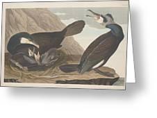 Common Cormorant Greeting Card