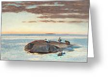 Common Eiders On A Rock Greeting Card