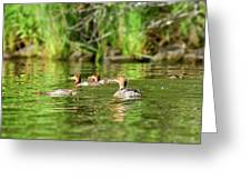 Common Merganser Greeting Card