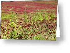 common sainfoin Onobrychis viciifolia Greeting Card