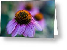 Coneflower Ballet Greeting Card