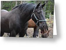Cooke City Horses Greeting Card