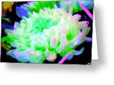 Cool Colorful Chrysanthemum Greeting Card