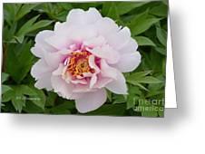 Cora Louise Greeting Card