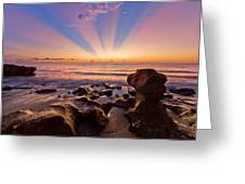 Coral Cove Greeting Card