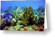 Coral Head Greeting Card