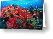 Coral Reef Scene Greeting Card