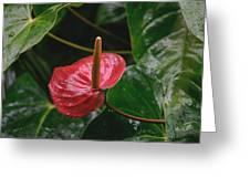 Corazon Chino Greeting Card