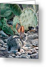 Cottontail Sunrise Greeting Card