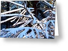 Country Solitude Greeting Card