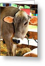 Cow 2 Greeting Card