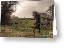 Cows In A Field By A Barn Greeting Card