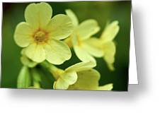 Cowslip Greeting Card
