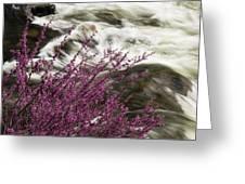 Cranberry Gulch Greeting Card