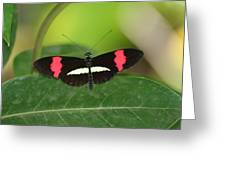 Crimson Patched Longwing Greeting Card