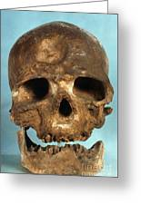 Cro-magnon Skull Greeting Card