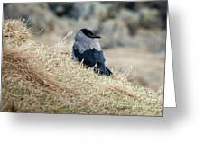 Crow In The Gras Greeting Card