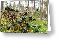 Crowberry Greeting Card