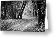 Curving Trail Entering Deciduous Forest Greeting Card