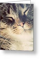 Cute Small Cat Portrait Greeting Card