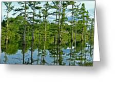 Cypress Grove Greeting Card