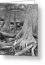 Cypress Trees I V Greeting Card