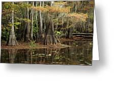 Cypress Trees In Caddo Lake Greeting Card