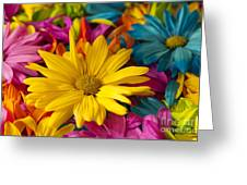 Daisies Petals Greeting Card