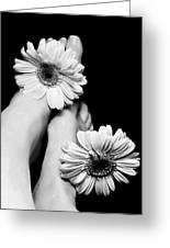 Daisy Toes Greeting Card