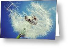 Dandelion And Blue Sky Greeting Card