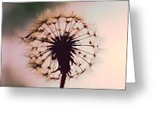 Dandelion Glow Greeting Card