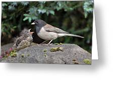 Dark-eyed Junco Mother And Baby Greeting Card