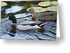 Day On The Pond Greeting Card