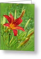 Daylily On Green Greeting Card