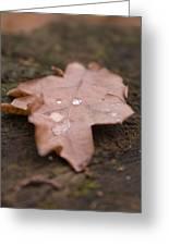Dead Leaf Greeting Card